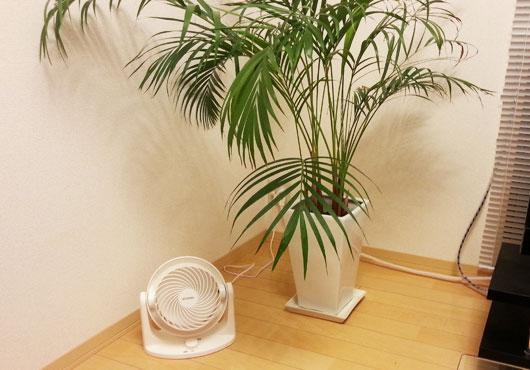 観葉植物とサーキュレーター