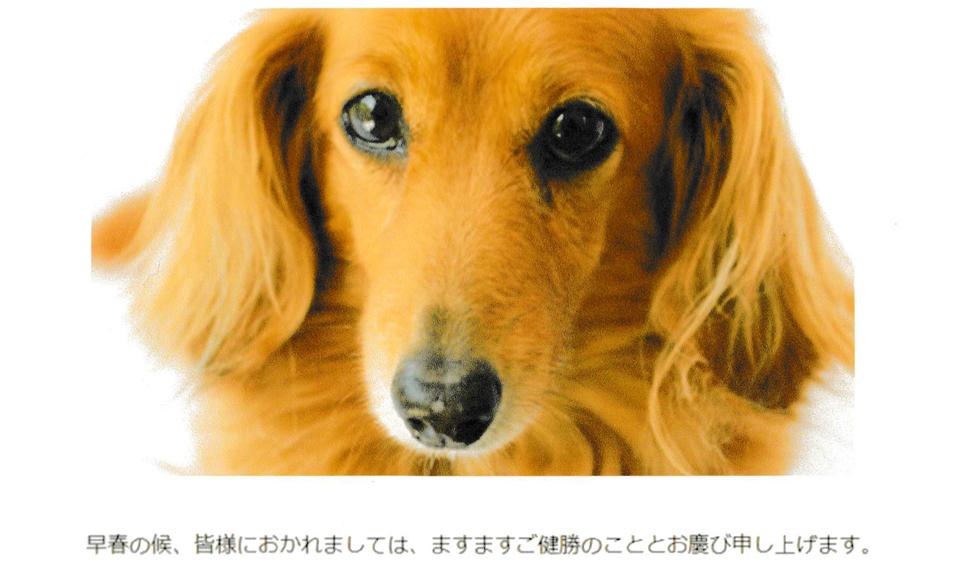 光沢紙で画像と文字を印刷したときのサンプル